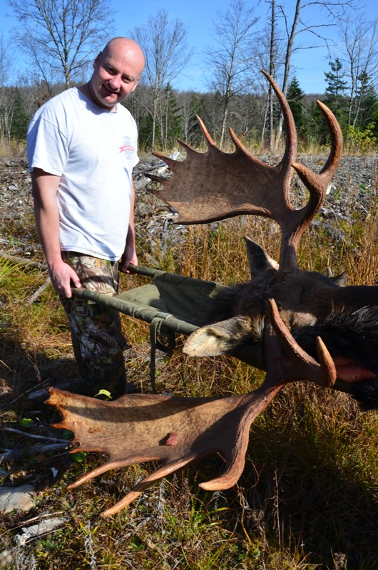 Maine Trophy Bull Moose