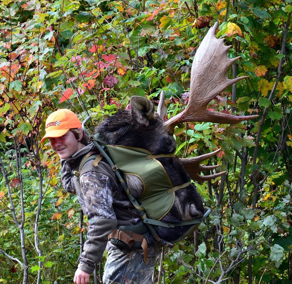 Moose-packing-out-Maine-hunt